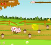 Hra - PigRace
