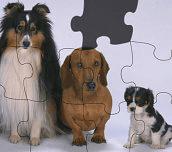 Hra - Puzzlesozvieratkami