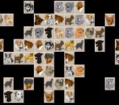 Hra - DogMahjong
