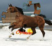 Hra - HorsePuzzle
