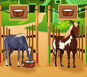 Hra - Starostlivosť o kone