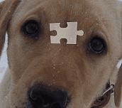 Hra - Puzzlepsík