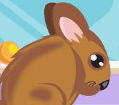 Chinchilla Pet Care